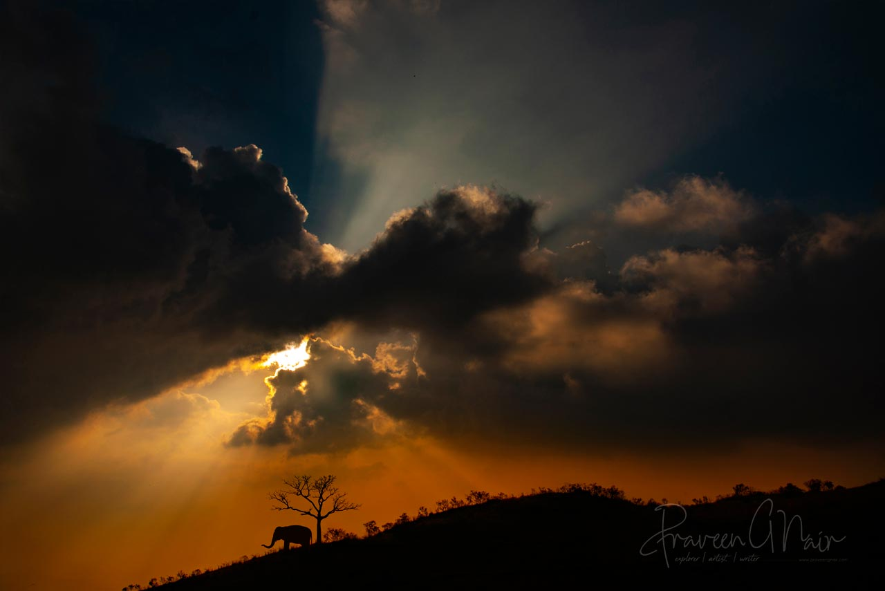 Sunset with Indian elephant at munnar