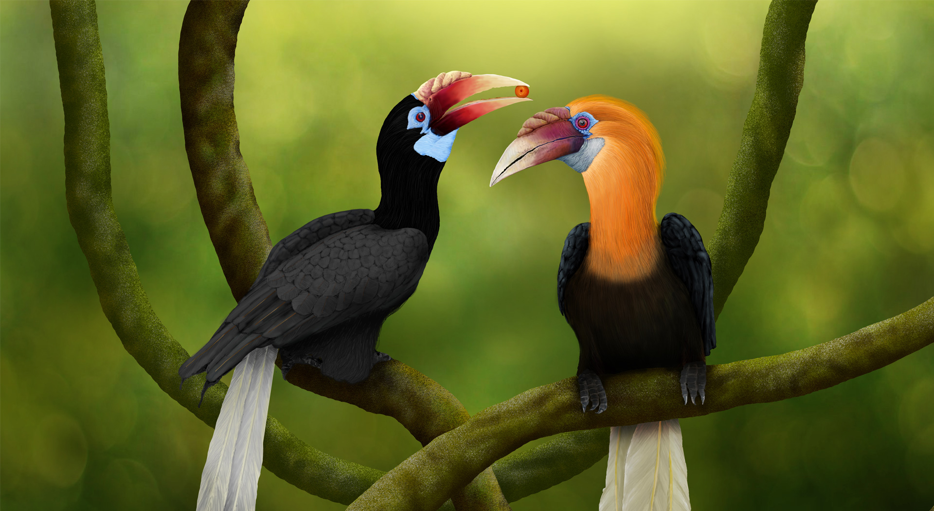 Narcondam_hornbill, Bucerotidae family, Hornbill_Painting, Illustration, Birds_Illustration