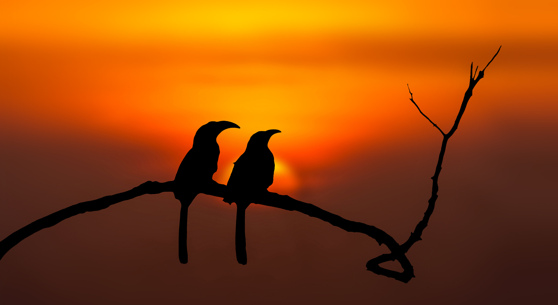 praveen-g-nair_Malabar-grey-hornbill-Pair_from_gavi-forest_Kerala, www.praveengnair.com, praveen g nair, indian wildlife photographer, artist, explorer, writer, wildlife photographer, wildlife photographer from kerala, wildlife photographer in world, Birds of Kerala